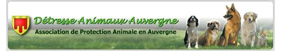 chien de chasse noir et blanc à Cunlhat Sosauvergne2